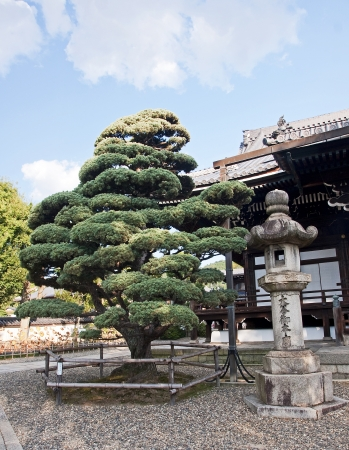 corpses: Traditional old lamp in garden - Kyoto - Japan