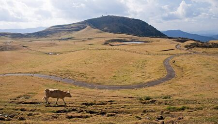 Cow on alpine pasture - view in autumn Stock Photo - 17472786