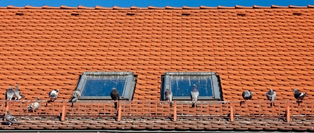 droppings: Soiled with bird droppings roofs and windows of houses Stock Photo
