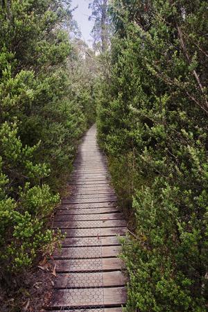 bushwalk: View Track in Cradle Mountain - Tasmania (Australia)