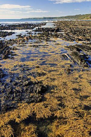 Seaweed on rocky beach in australia