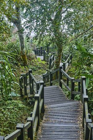 Tourist path on the Alishan slopes - Taiwan Stock Photo