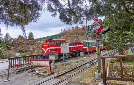 ALISHAN, TAIWAN - NOVEMBER 6, 2017: Train in Alishan on 6 November 2017 in Alishan, Taiwan. You can move around the Alishan Park using a train that travels among the picturesque landscape.