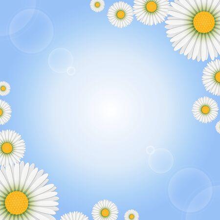 marguerite: Marguerite flowers on light background