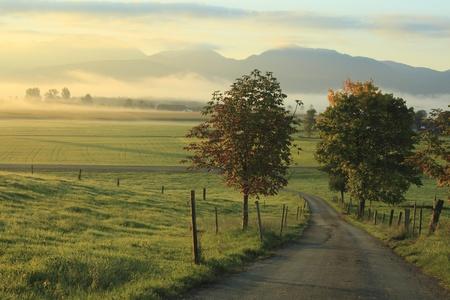 Herfst kleurrijke gebladerte over straat in de ochtend