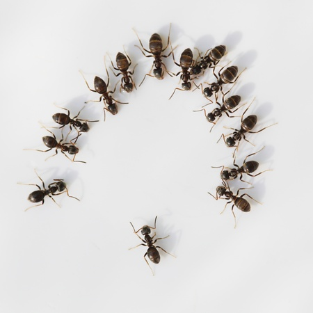 Ant meeting with many ants in a ring