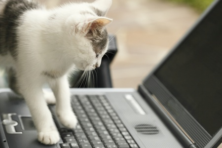 Cat is siting in front of a laptop