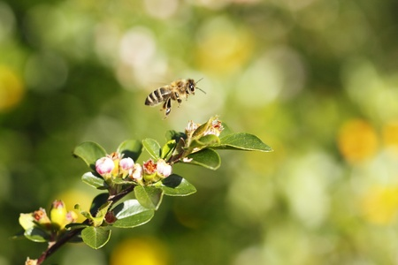 The bee flying over natural plants at sunshine