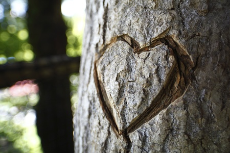symbol of heart carved in tree trunk