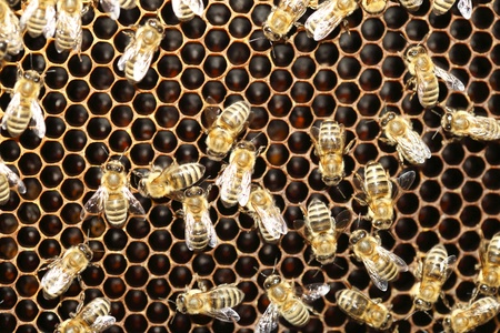 Macro of many working bee on honeycells. Stock Photo - 10233129