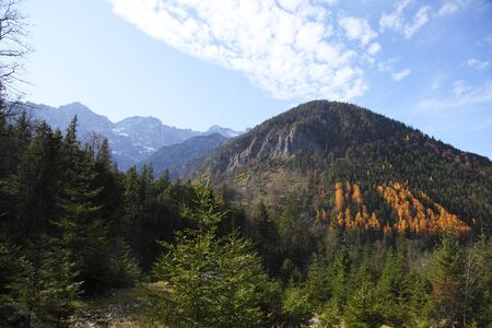 autumn view to alps with baltic redwoods photo