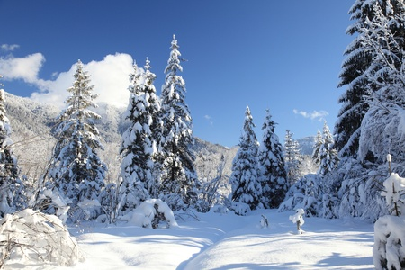 Beautiful winter landscape with snow covered trees Standard-Bild