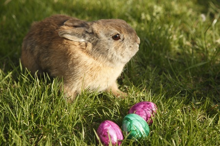 easter bunny with three eggs on field photo
