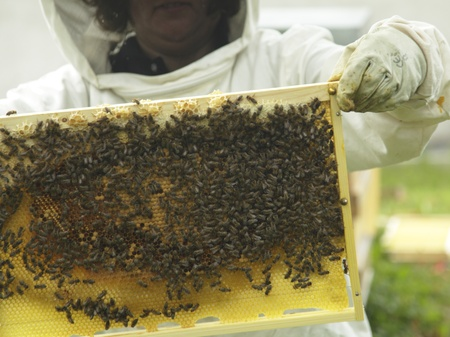 bee keeper with bees on hexago cells photo