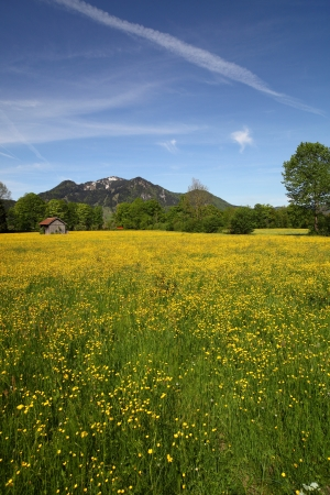 seasonic: field with many flowers at spring time Stock Photo