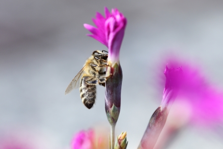 a bee is sitting on a pink flower photo