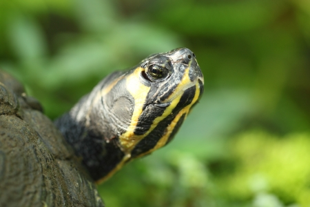 a turtle portrait with green nature in background photo