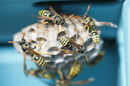 many wasps in the nest with blue background