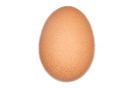 one brown egg with white background closeup Stock Photo - 18201171