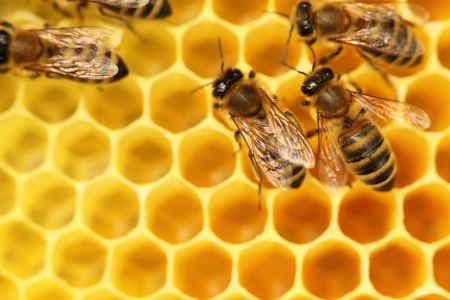 some bees are going with yellow cells in background Standard-Bild