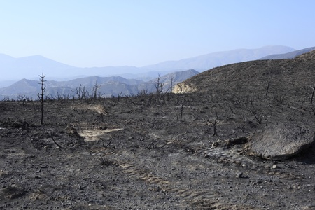 forest fire in the greek mountains, black trees photo