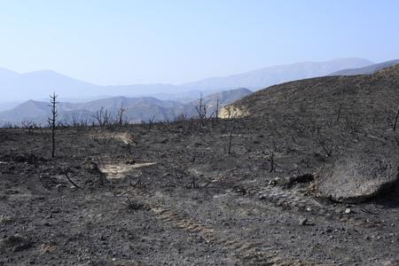 forest fire: incendio forestal en las monta�as griegas, �rboles negros
