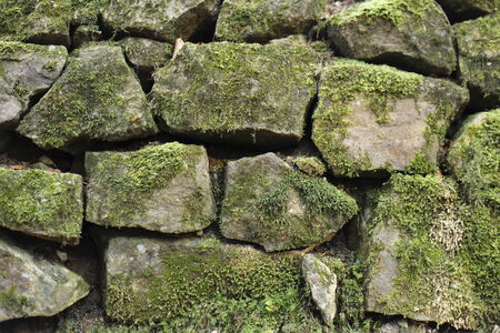 natural stone wall with many moss on it photo