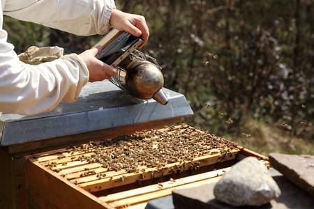 colmena: apicultor con fumador en la mano trabaja en colmena de abejas