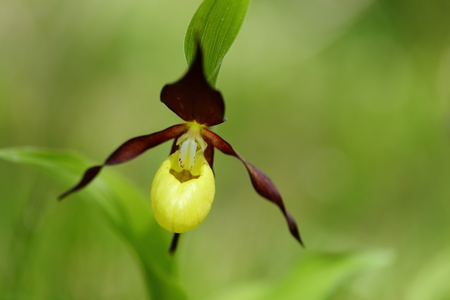 yellow blossom of a orchid in nature Stock Photo