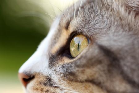nahaufnahme: macro shot of a grey cats eye