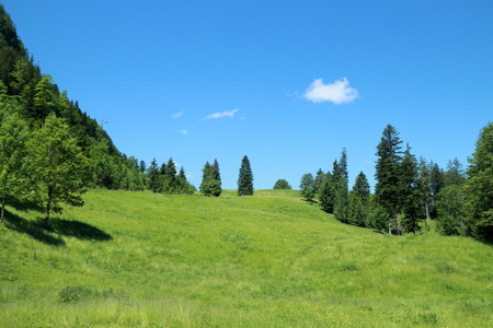 field in the austrian alps on a summer day Stock Photo