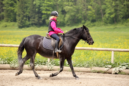 horse sleigh: young girl is riding on horseback on a course