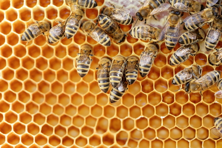 some working bees in a bee hive Stock Photo
