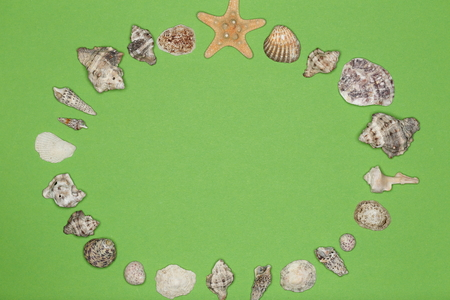 round circle with different sea shells as background Фото со стока