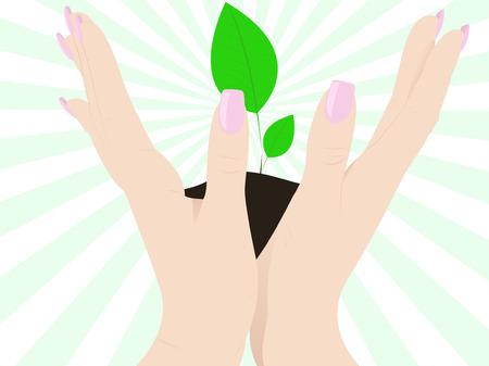 origins: Open hands up with plant