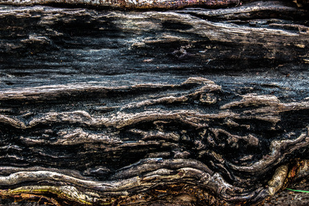 bark peeling from tree: A decaying tree limb knot holes in a row and interesting peeling off of layers or bark. Stock Photo