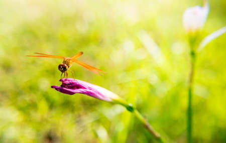 folwer: Dragonfly caught on pink flowers