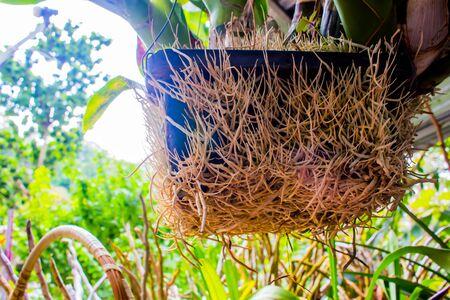 regenerate: Root beautiful orchid nature.