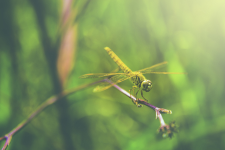 alongside: Dragonfly creatures that live alongside nature. Stock Photo