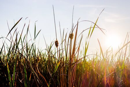 generic location: Glare meadow before sunset, very beautiful.