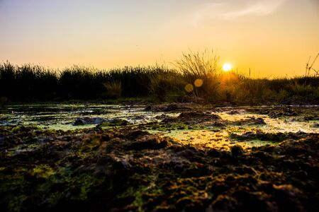 generic location: The last rays of the sun fall on the horizon, the beautiful grassland. Stock Photo