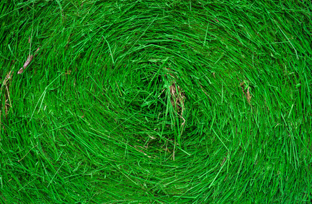 hayroll: Straw green background Was painted green Stock Photo