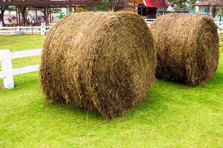 hayroll: Pham sheep straw roll