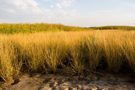 generic location: When light shines on such grassland.