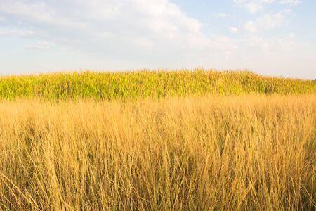 generic location: Prairie sky boundlessly