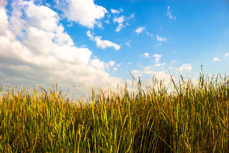 generic location: Cloudy sky beautiful meadow