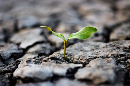 Small tree in dry areas Stock Photo