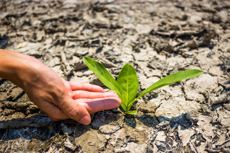 Planting trees to mitigate drought. Tree care. Stock Photo