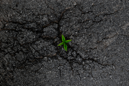 road surface: The power of trees on the asphalt road surface crack. Stock Photo