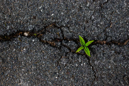 road surface: Small tree on the asphalt road surface crack.